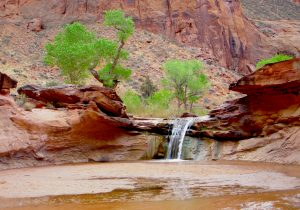Wilderness Healing Coyote Gulch