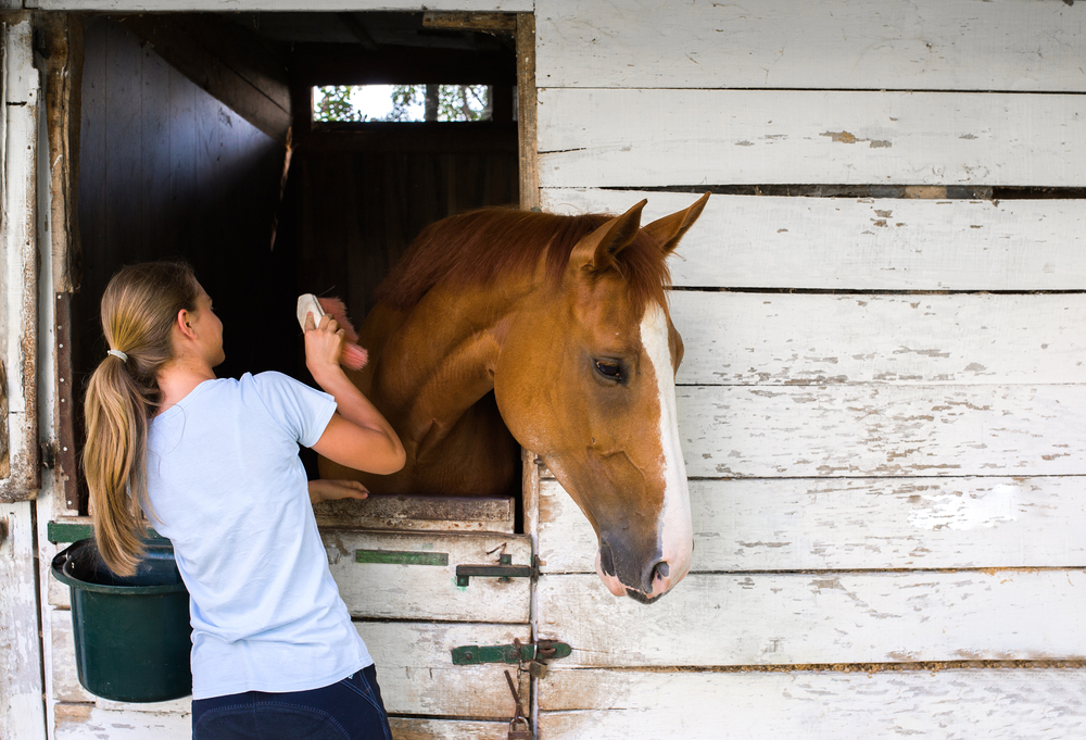 teen girl taking care of horse
