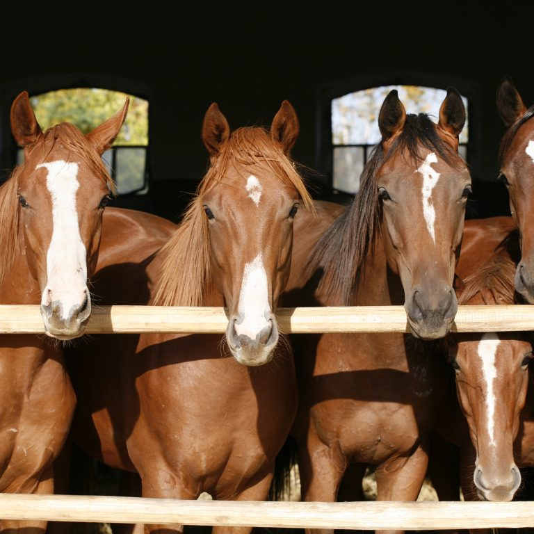 horses standing in a row